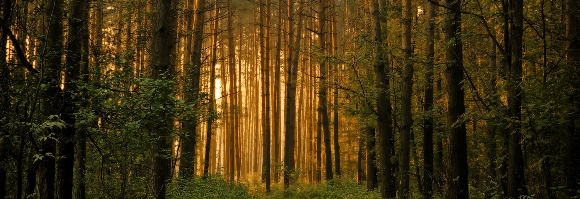 Bambo-Forests-Wallpapers